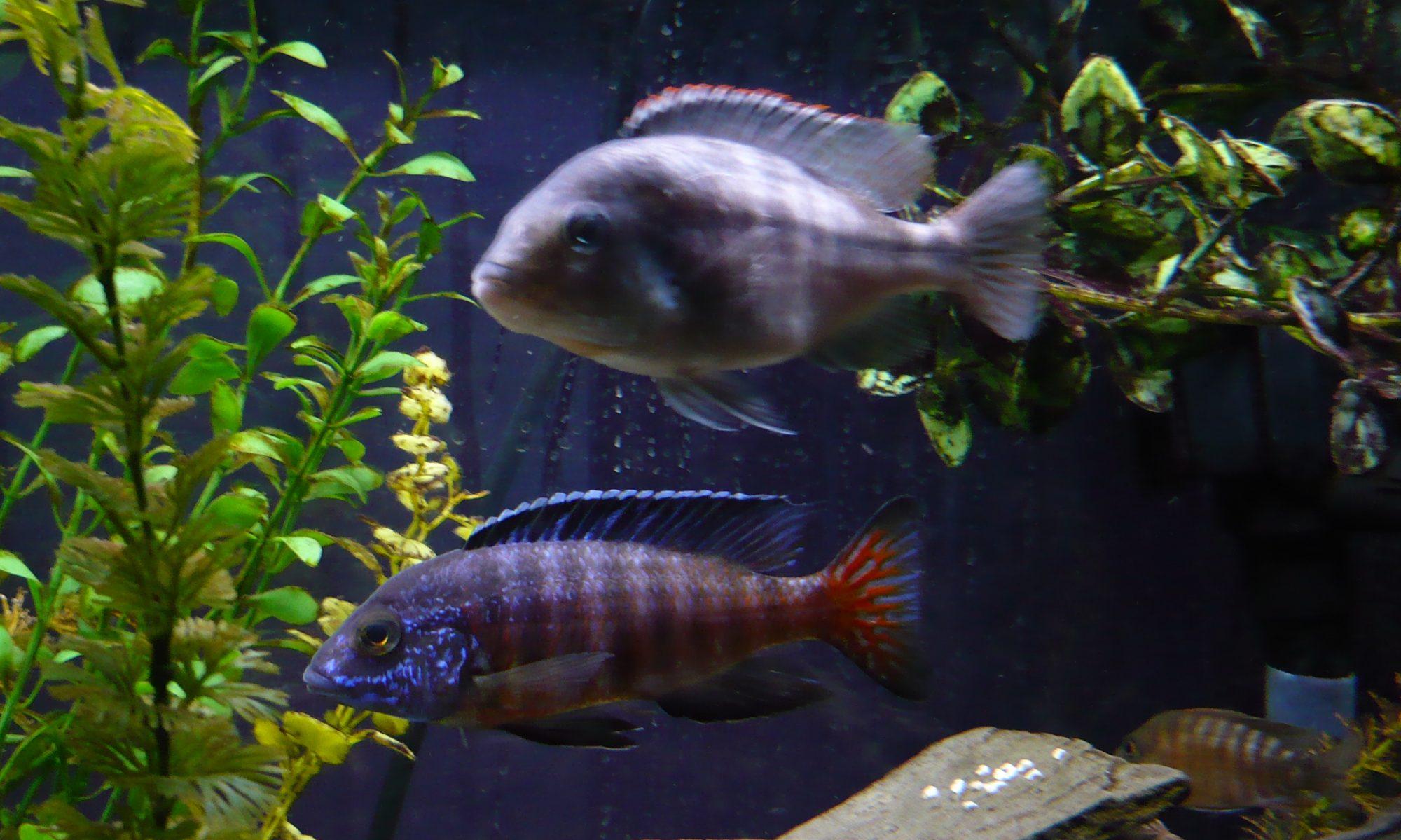 Paul's Fish