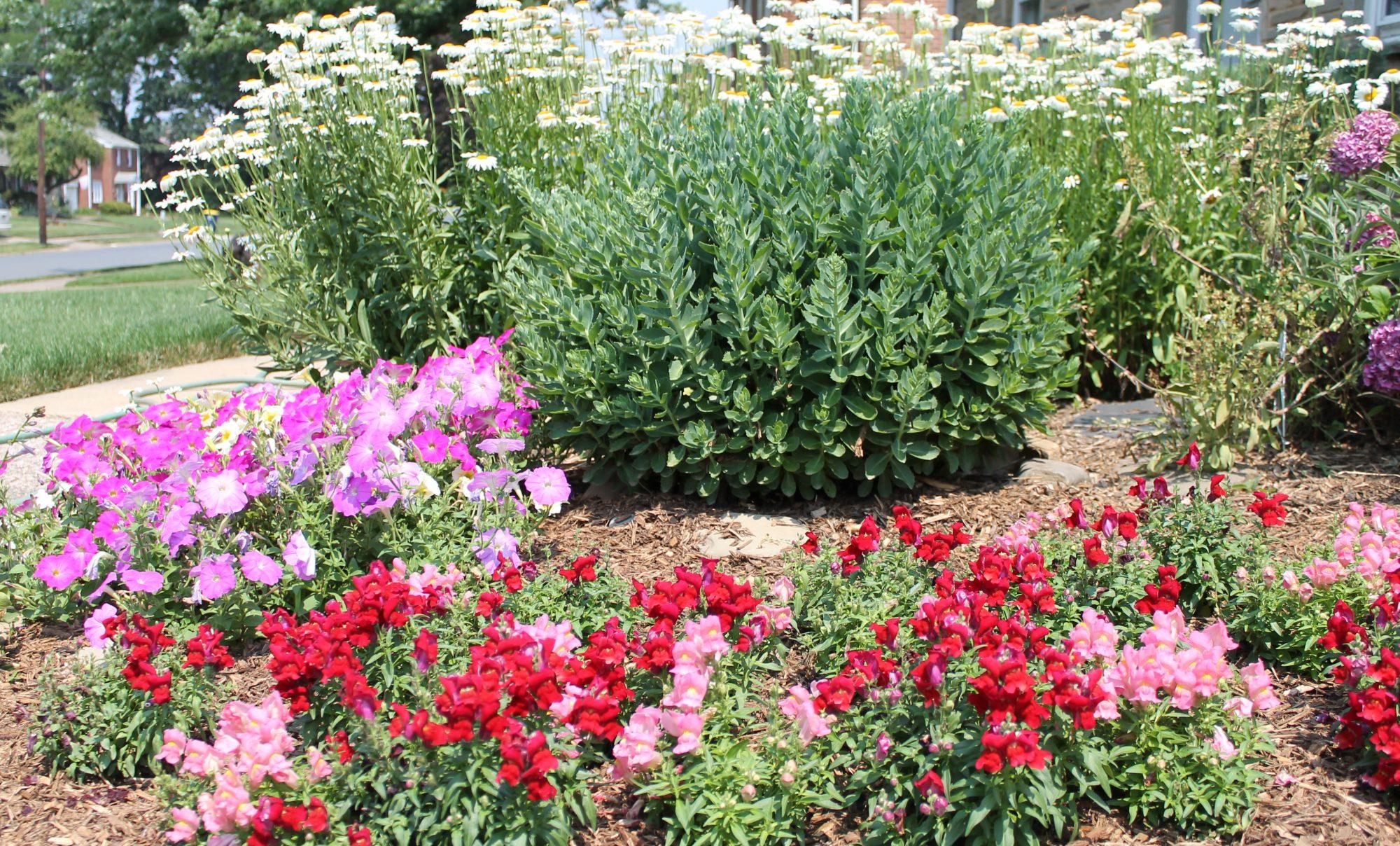 Homlish's Garden